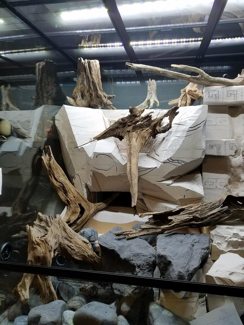 Placing driftwood inside The Rainforest Exhibit to get an idea of where they will be permanently.  It will take some time until I fully decide on the final layout.
