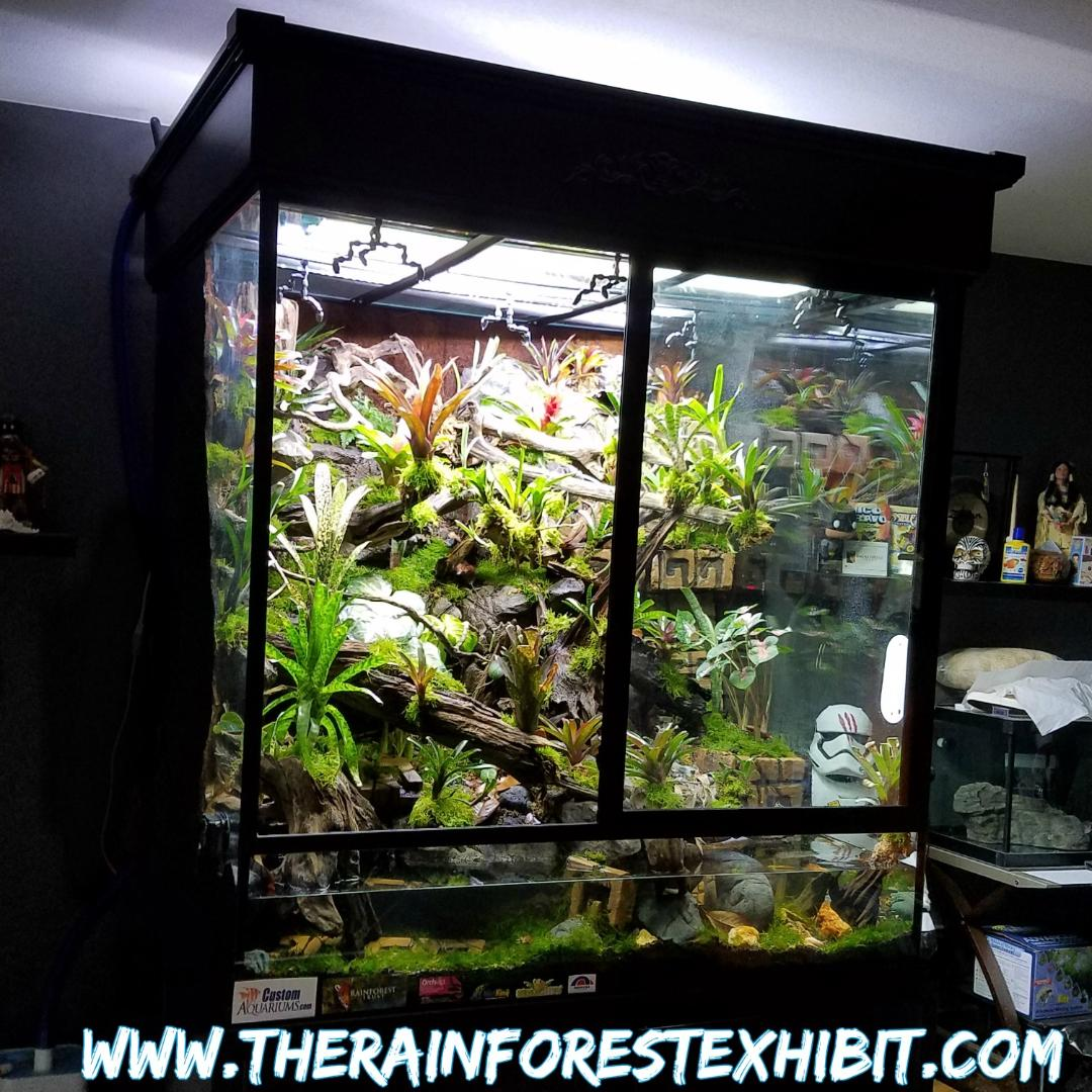 The Rainforest Exhibit...COMPLETED!