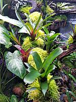 The Rainforest Exhibit...bromeliads from www.bromeliad.com