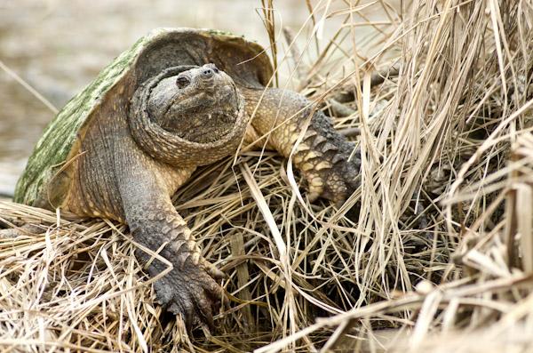 Name:  Turtle2.jpg Views: 280 Size:  190.6 KB