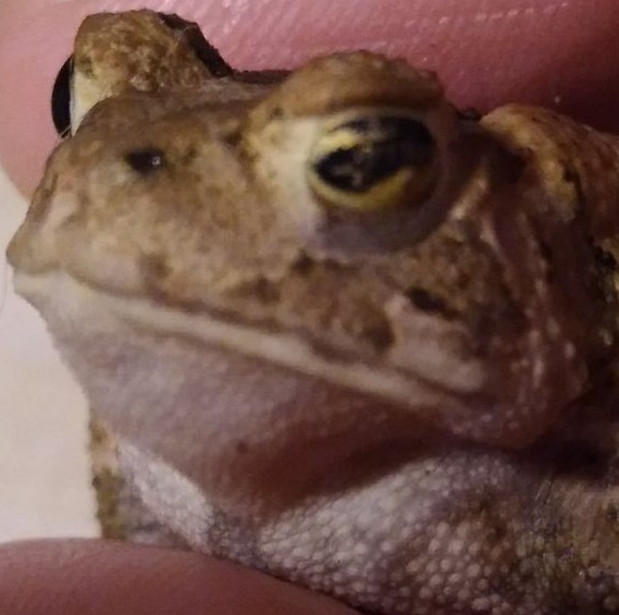 Name:  toad.jpg Views: 52 Size:  71.6 KB