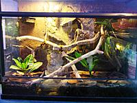 "terrarium for whites-its 40"" L X 32"" H X16""W it has small 1 1/2g pond on the left of tank (background done when I got it)"