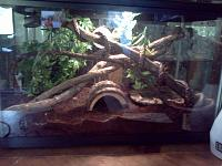 Whoa this used to be her home!  Come a long way, tree frogs should be in vertical vivariums, they enjoy the height!