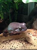 Wow, long time no see! Here are pictures of my Whites Tree Frog Mr.Jelly and a few other species