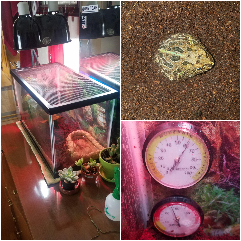 Name:  frog setup.jpg Views: 110 Size:  1.05 MB