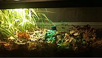 75 Gallon PA Woods Vivarium 2015-2016