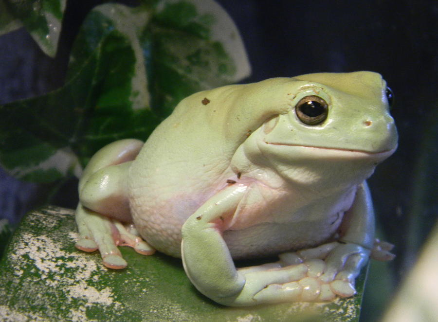 Name:  donlisk-albums-my-whites-tree-frogs-picture11528-new-pics-2-18-2011.jpg