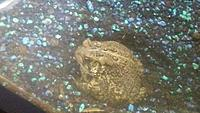 Bella  North American Toad  5.2oz\150g