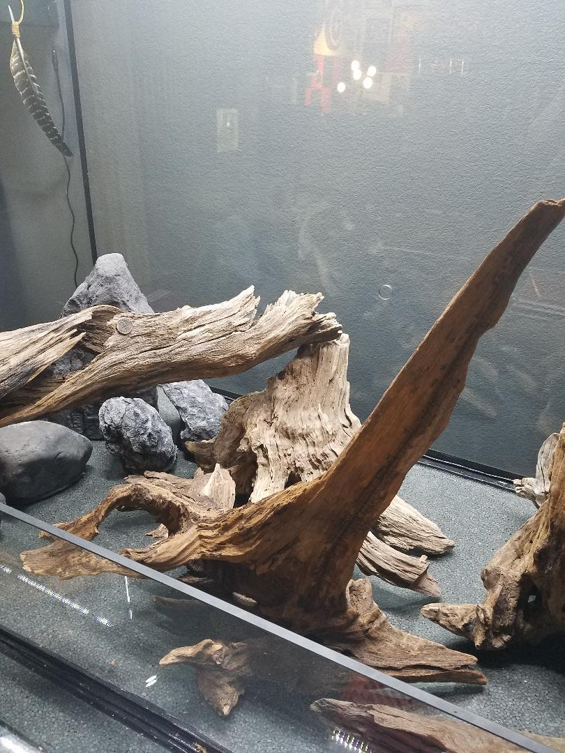 Name:  Driftwood 005.jpg Views: 72 Size:  190.6 KB