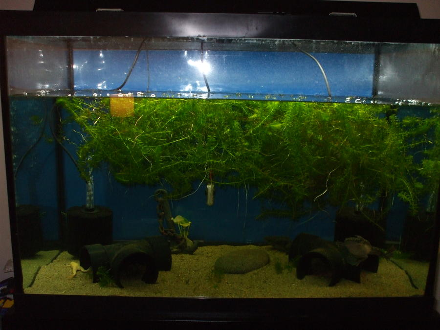 Name:  frogs 65 gallon 006.jpg Views: 1753 Size:  72.4 KB