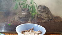 Frog and Toad pictures