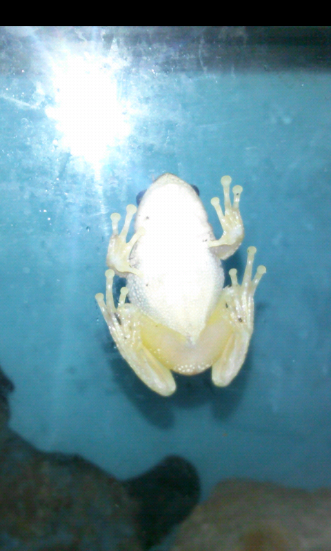 Name:  froggy.png Views: 30 Size:  405.4 KB