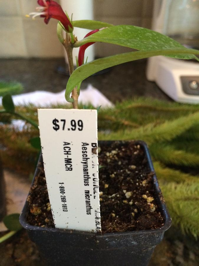 Name:  plant 1.jpg Views: 329 Size:  67.3 KB