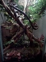 2nd attempt at a viv.  Much bigger and more appropriate for tree frogs.  35 gallon hex tank.