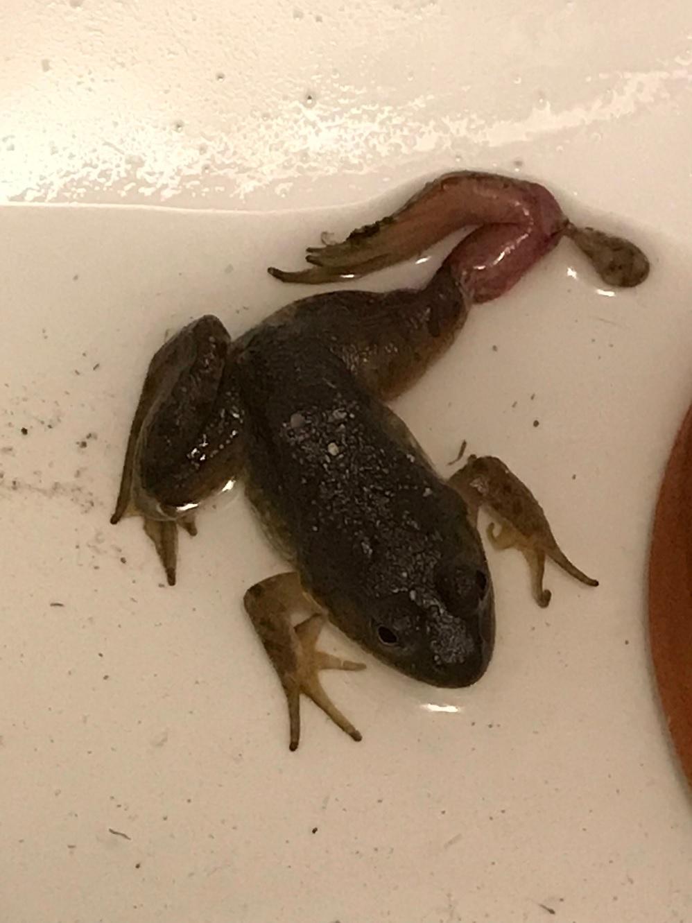 Name:  unidentified frog.jpg Views: 62 Size:  221.4 KB