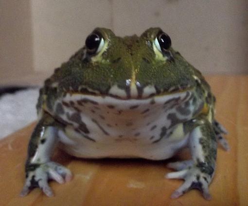 Name:  frog3oct,6.jpg Views: 562 Size:  94.1 KB