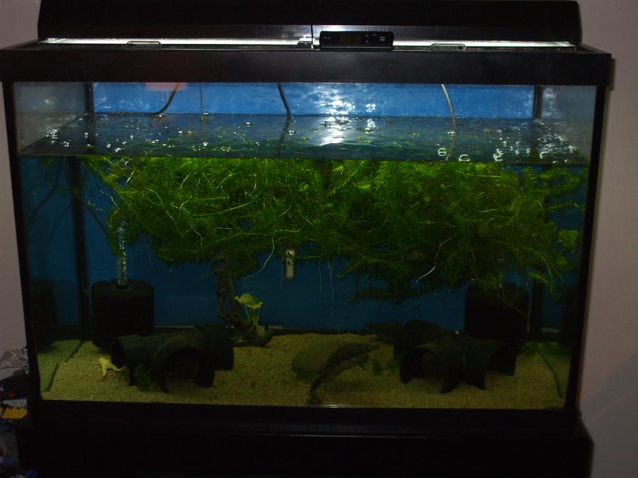Name:  frogs 65 gallon 001.jpg Views: 2187 Size:  62.2 KB
