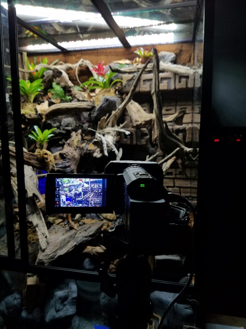 Name:  TRE Flora 5 camera.jpg Views: 48 Size:  98.9 KB