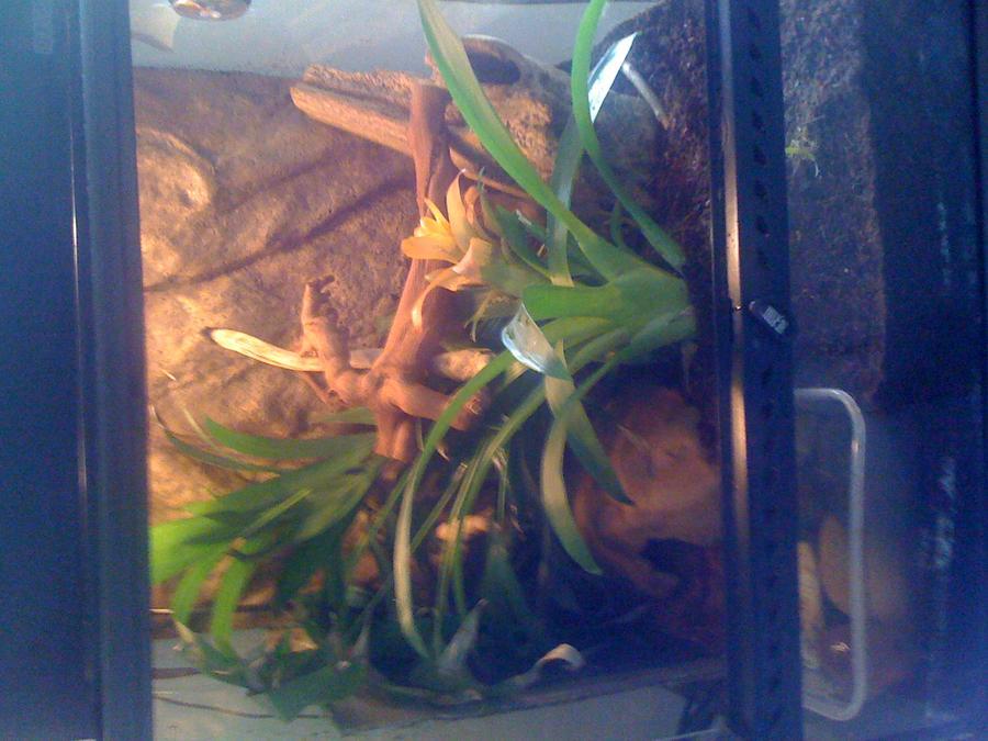 Name:  frogs.jpg Views: 340 Size:  78.9 KB