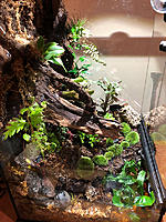 My first vivarium attempt.  
