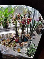 Some of the bromeliads that we received for The Rainforest Exhibit from www.bromeliad.com