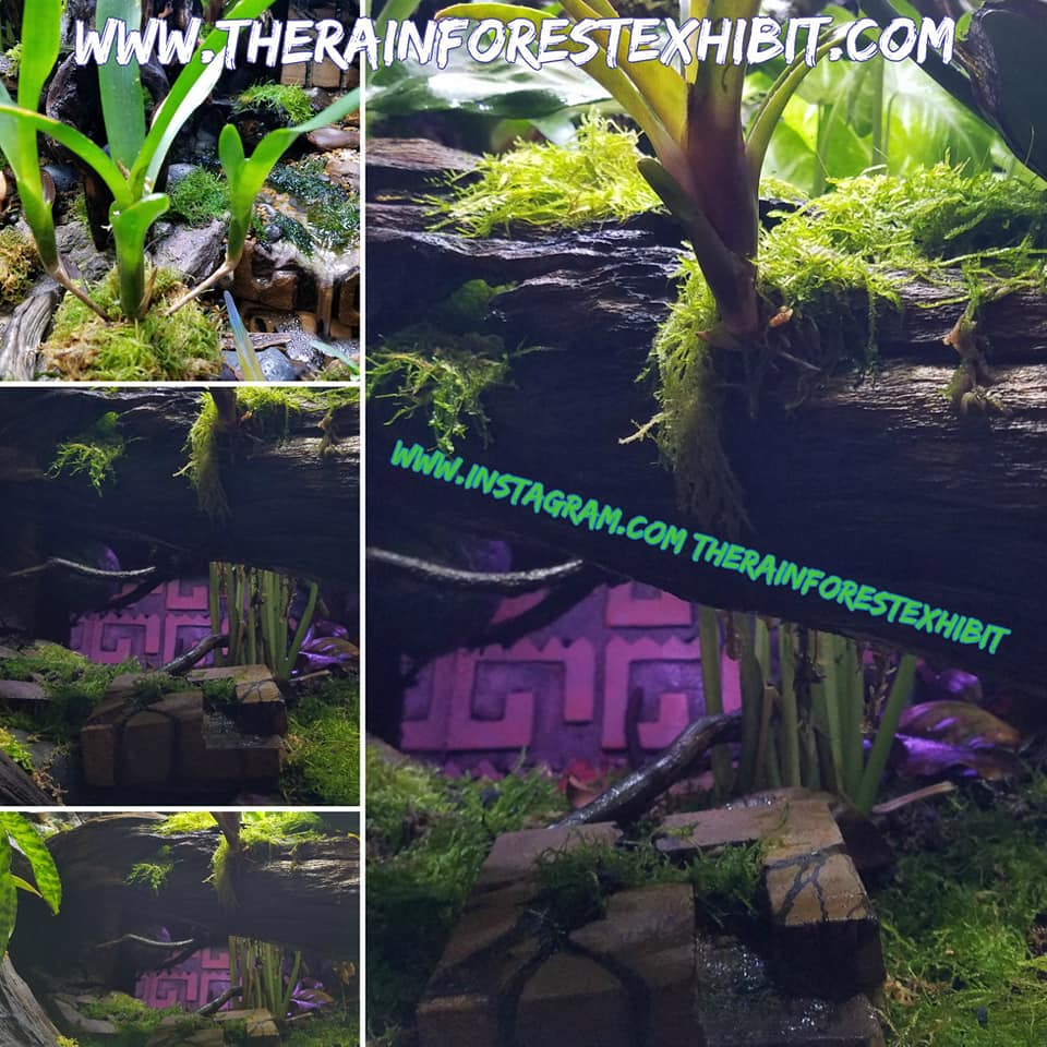 Name:  TRE Growth Late June1.jpg Views: 100 Size:  130.6 KB