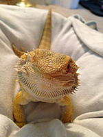 Dexter the female dragon.