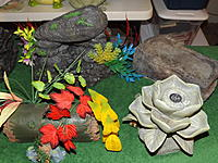 Decor For White's Tree Frog Habitat