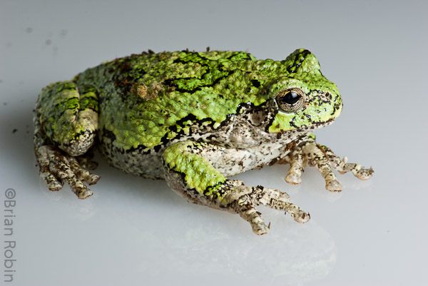 Name:  Accidental Froggy.jpg Views: 287 Size:  107.5 KB