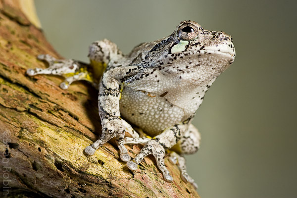 Name:  Guest Frogs-2.jpg Views: 201 Size:  125.3 KB