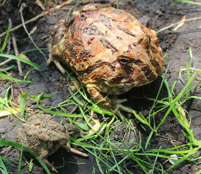 Name:  Button and Toad in the yard.JPG