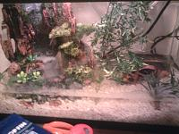Fire-bellied toad tank