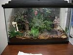 """The Greecian Love Forest""    Malaysian Leaf Frog (Daun) tank"