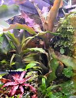 My Dendrobates Leucomelas Viv plant growth Feb 2011 to June 2011.  I pulled two pups from this so far for another viv.