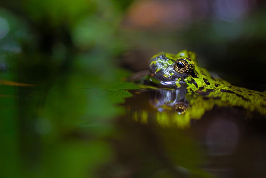 Name:  Frog 1.jpg Views: 161 Size:  43.5 KB