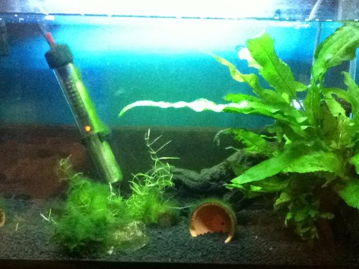 Name:  my frog tank.jpg Views: 536 Size:  147.6 KB