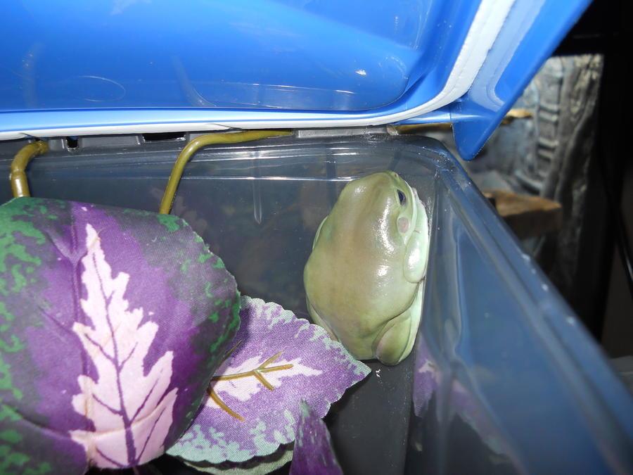 Name:  frog2 011.jpg Views: 1399 Size:  78.1 KB