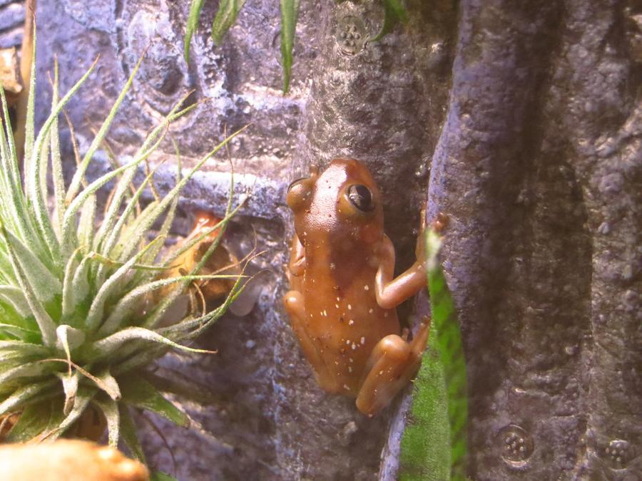 Name:  Frogs 5.jpg