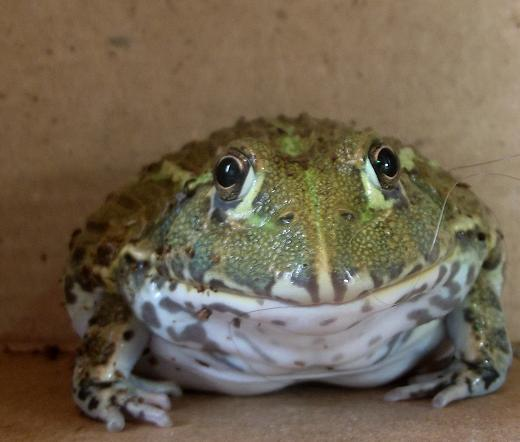 Name:  bullfrog5.jpg Views: 1724 Size:  98.9 KB
