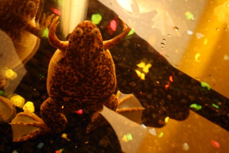 Name:  Kermit 011.JPG Views: 1705 Size:  257.0 KB