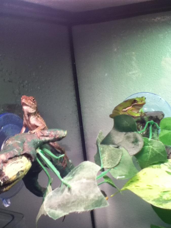 Name:  Kerli the Lizard and Oak Blossom.jpg Views: 1000 Size:  61.4 KB