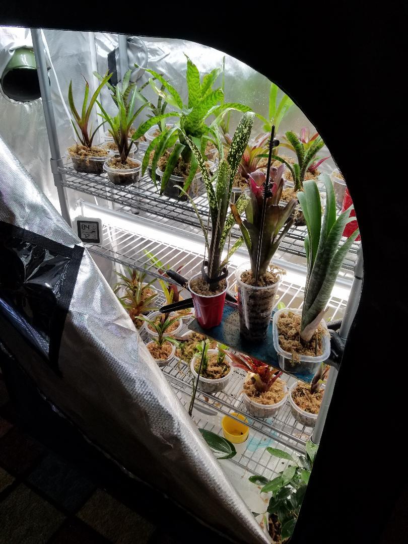 Name:  TRE Bromeliads - Dec 2018 003.jpg Views: 174 Size:  157.0 KB