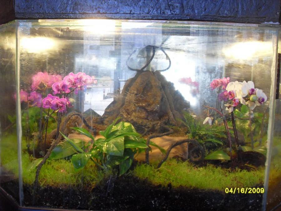 Name:  14320d1312154702-enclosure-month-competition-entries-august-2011-irishronin-albums-terrariums-iv.jpg