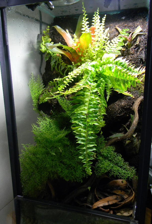 Name:  14557d1312477300-enclosure-month-competition-entries-august-2011-donlisk-albums-15-gallon-vertic.jpg