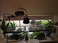 White's Tree Frog Enclosures by irThumper