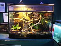 terrarium for whites-when I got it the background was already done. Compleat with a waterfall set up that doesn't work very well (losses all water in...
