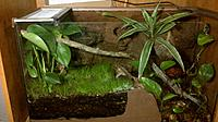 Future home for my pair of crested geckos, once the Kentucky blue grass grows in. In the right corner there is a tigers eye lagoon with a water fall