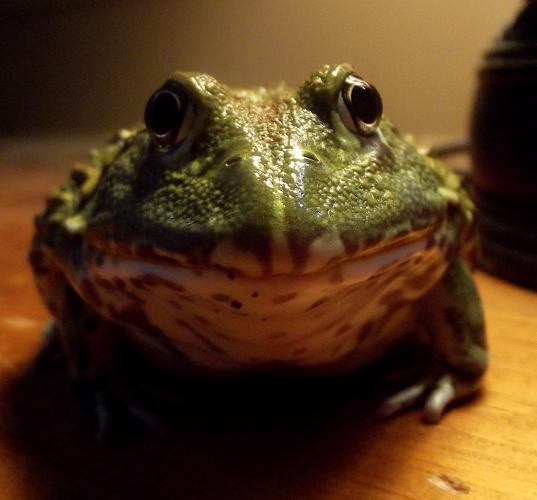Name:  frog2oct,6.jpg Views: 633 Size:  98.2 KB