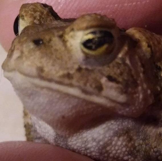 Name:  toad.jpg Views: 49 Size:  71.6 KB