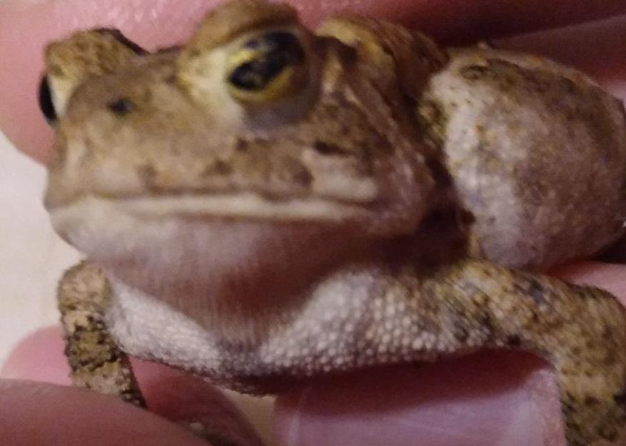 Name:  toad2.jpg Views: 43 Size:  115.4 KB